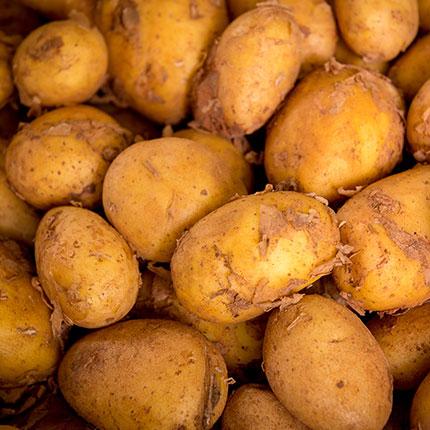 Kartoffeln & Kartoffelprodukte